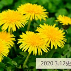 2020.3.12更新記事一覧