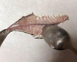 (1)中骨からスプーンを用いて身を外しているところ